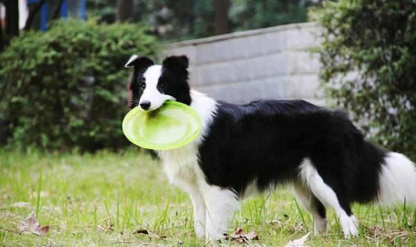 影响宠物狗训练的因素有哪些
