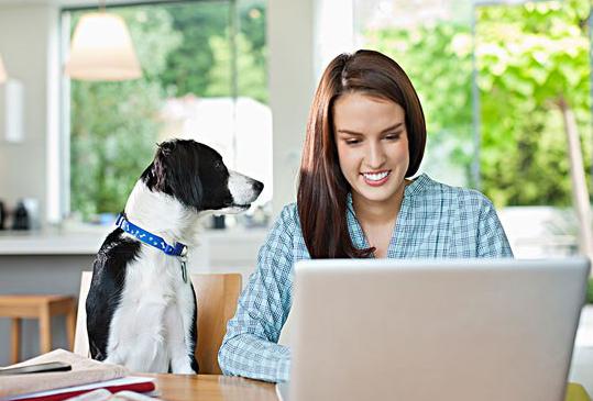 影响宠物狗训练的因素